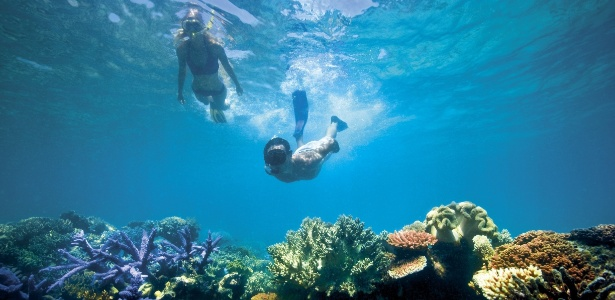 Quotes On Fringing Reefs