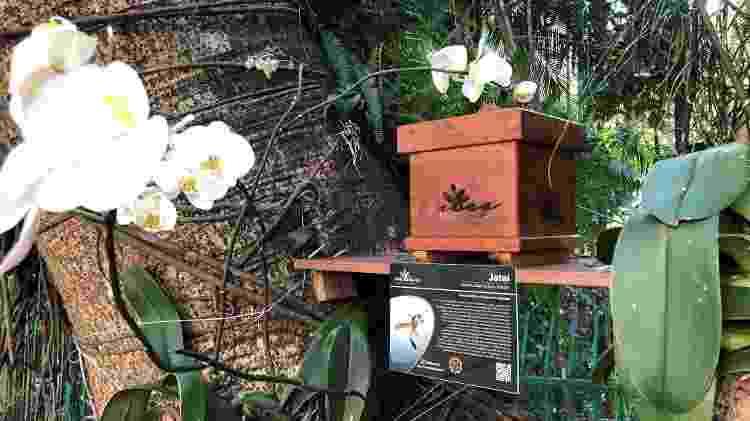 O objetivo é chamar atenção para a importância das abelhas para a sobrevivência dos humanos - Divulgação