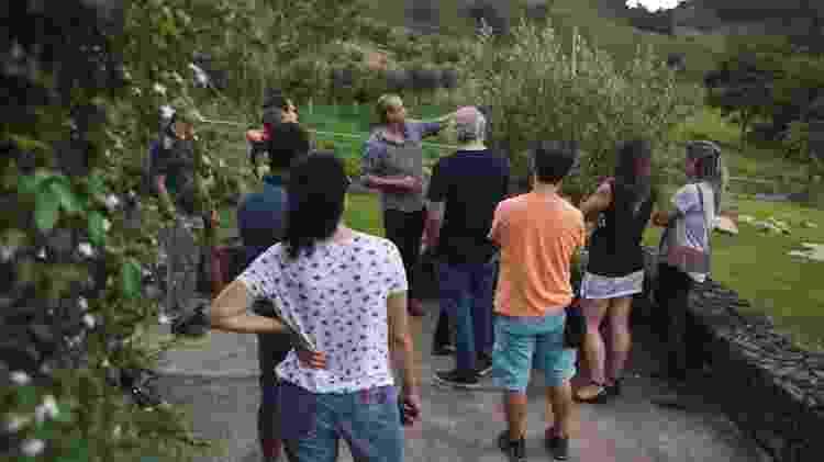 No tour na Oliq, os visitantes conhecem de perto uma oliveira -  Leonardo Finotti/Divulgação