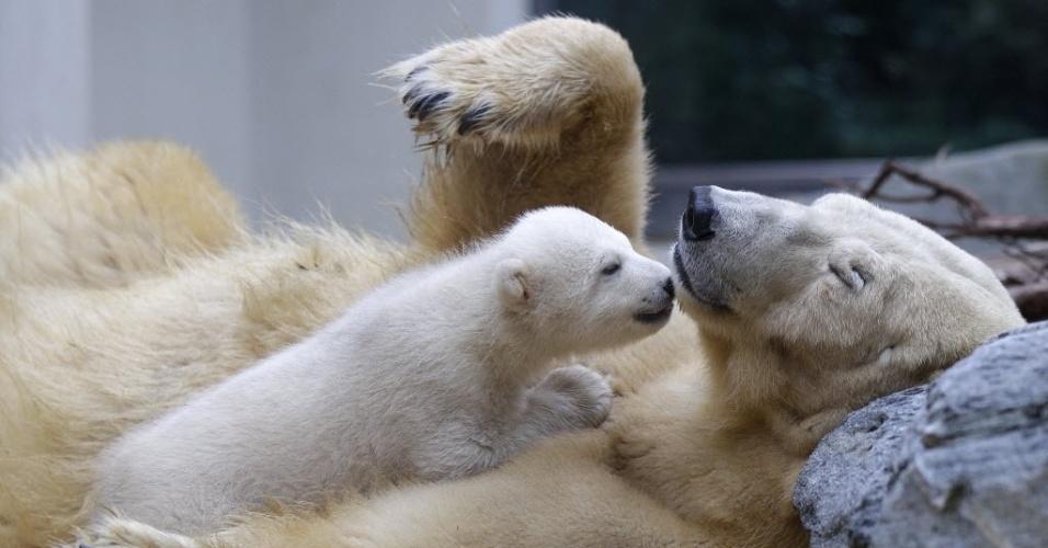 O pequeno urso polar Anori brinca com sua mãe Vilma pela primeira vez fora de sua gruta no zoológico de Wuppertal, na Alemanha