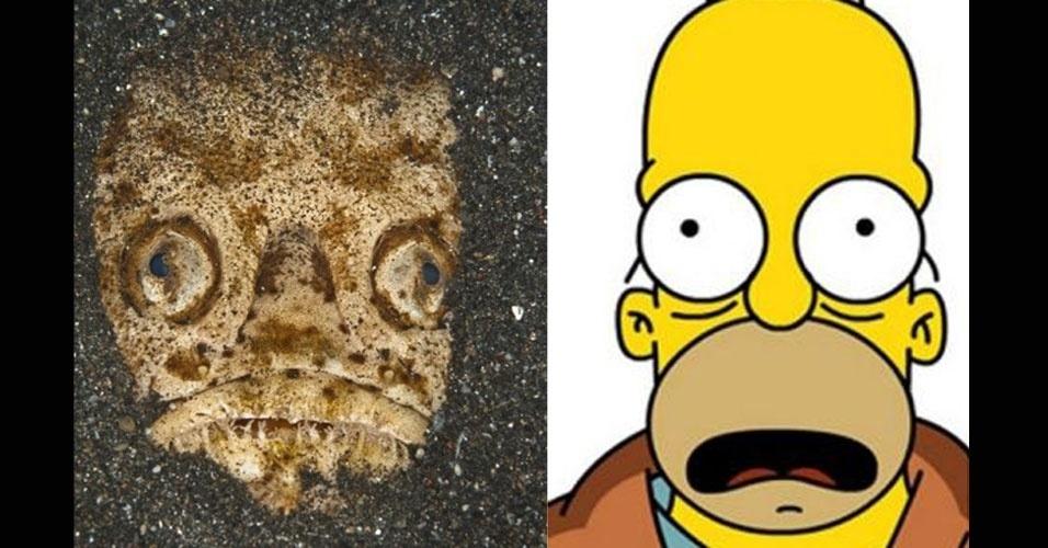 """Um sósia incomum de Homer Simpson foi encontrado pelo fotógrafo Mark Webster no fundo do mar, mais especificamente no Estreito de Lembeh, na Indonésia. Incomum, pois é um peixe, da espécie stargazer. Mark exalta os """"olhos esbugalhados"""", o """"olhar um pouco vago"""" e a """"boca aberta"""" semelhantes a Homer"""