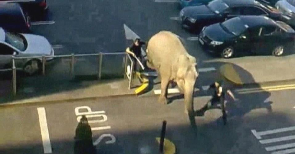 Baby, uma elefante asiática que pesa 2,5 toneladas, escapa de um circo montado próximo a um shopping center em Blackpool, na Irlanda, e vai dar um passeio num estacionamento. Enquanto isso, os cuidadores dela tentam fazê-la voltar ao circo