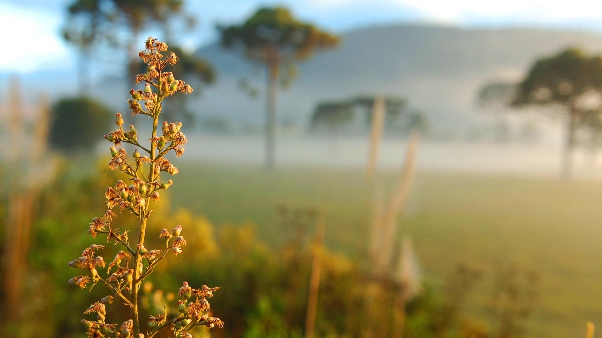 Lages (SC) amanhece com frio e neblina, mas sem geada
