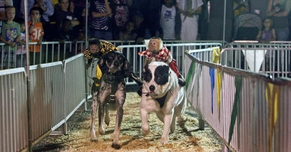 Os macacos Burt (esquerda) e BoBo montam seus respectivos cães, Scooby Azul e Sasha, durante competição na Feira do Condado de Pinellas, em St. Petersburg, na Flórida