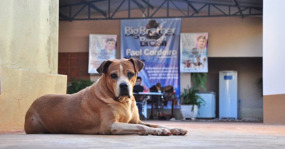 """A cadela de estimação do campeão do """"BBB12"""" em Aral Moreira (1/4/2012)"""