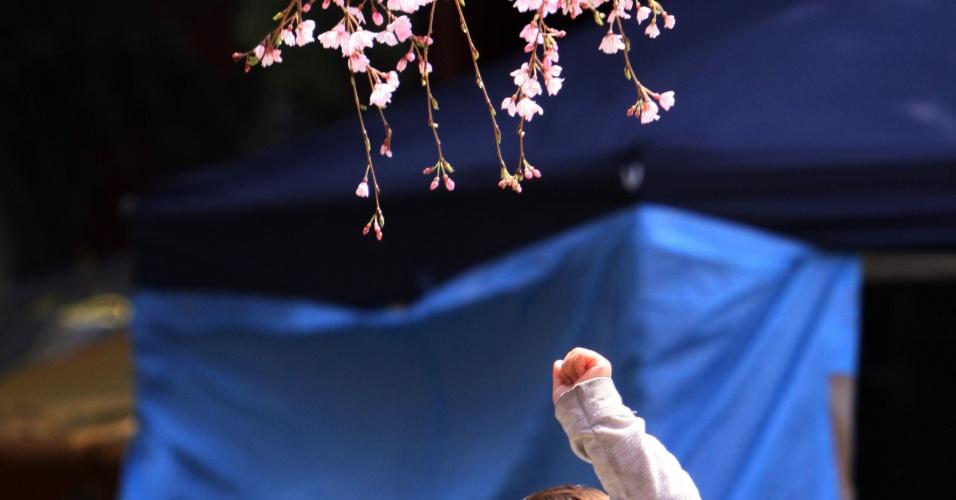 Pessoas admiram flores de cerejeira durante passeio em Tóquio, no Japão