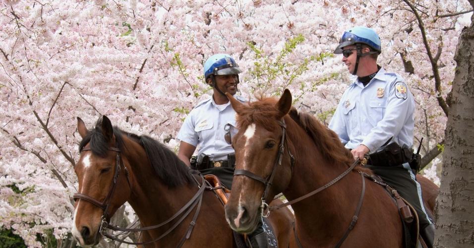 Policias montados em cavalos rondam parque em Washington (EUA) em meio a cerejeiras floridas