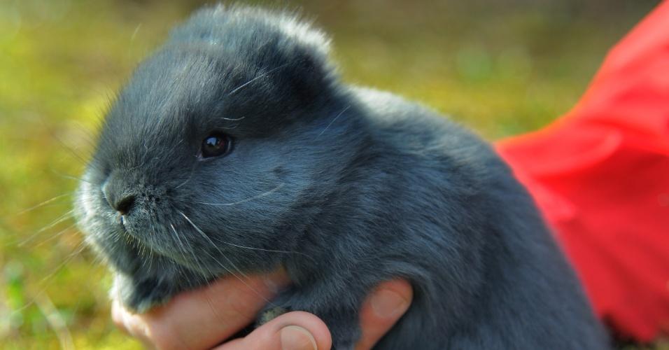 Esse coelhinho sem orelhas vem fazendo muito sucesso em Niederdorf, na Alemanha. Olha só que gracinha