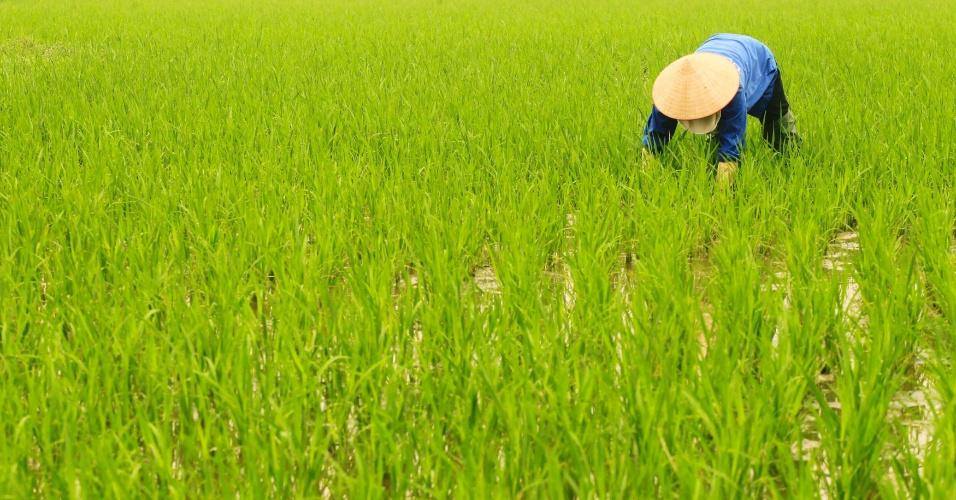 Fazendeiro retira ervas daninhas de plantação de arroz em Hanói, no Vietnã