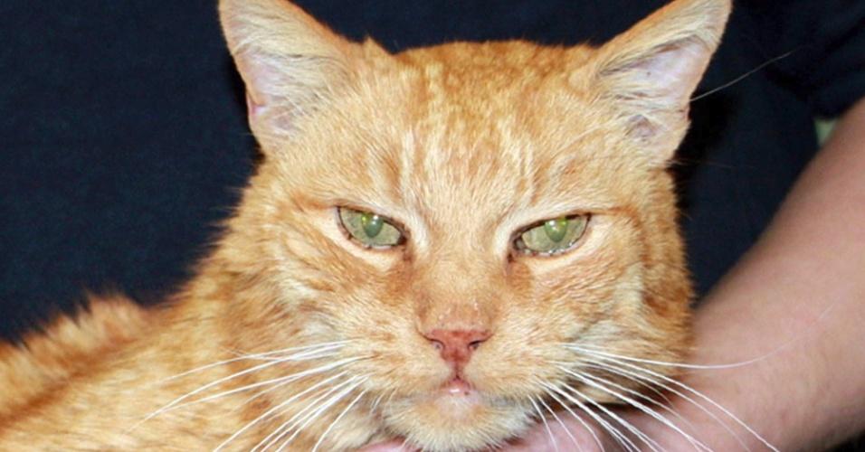 Gato devolvido a sua dona após ter desaparecido a 16 anos, em Unterhaching