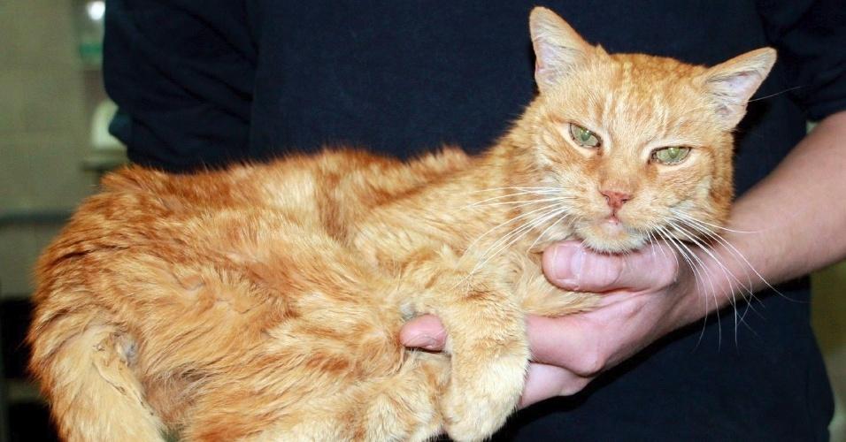 Gato Poldi é encontrado perto de Munique, na Alemanha, 16 anos depois de ter desaparecido