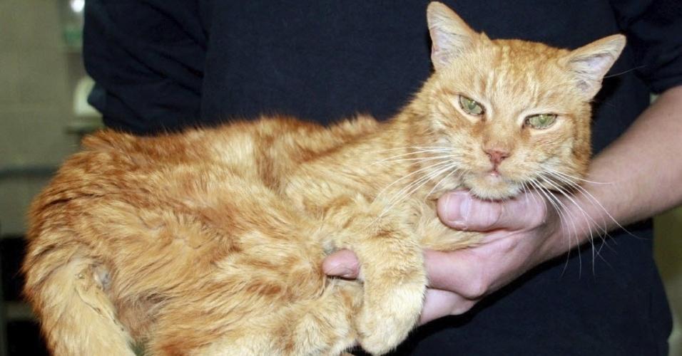 Gato Poldi, que ficou 16 anos sumido e foi recentemente devolvido à sua dona, na Alemanha. O bichano foi achado em uma floresta, perto da cidade de Munique, e levado a um centro de proteção animal. Poldi foi identificado graças a uma tatuagem atrás de uma das orelhas