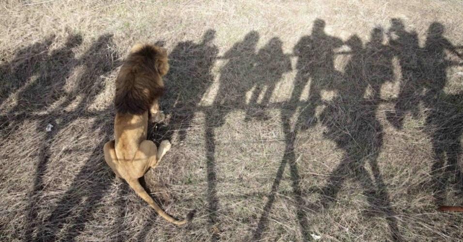 Visitantes projetam suas sombras sobre leão em parque zoológico em Belgorsky, na Ucrânia