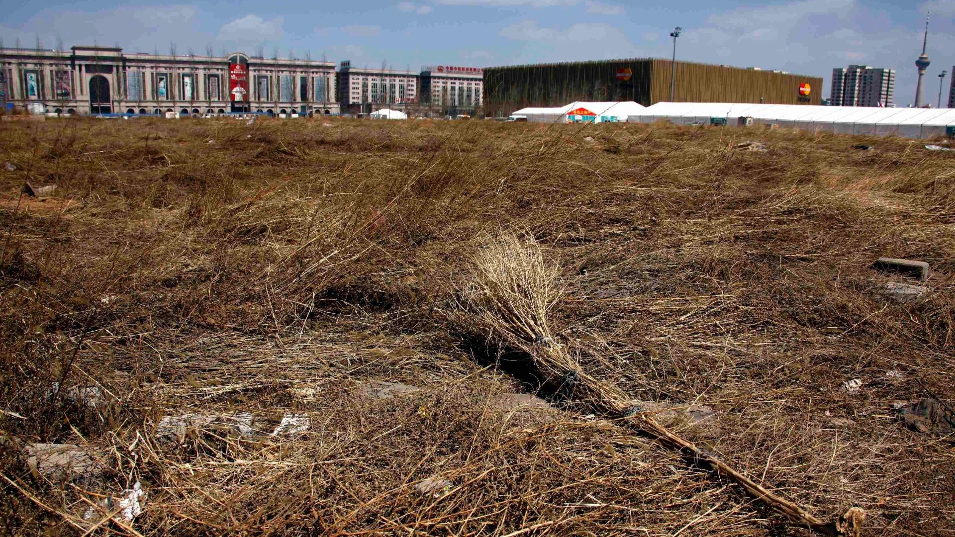 A região do estádio de beisebol dos Jogos de Pequim hoje está repleta de mato e totalmente abandonada