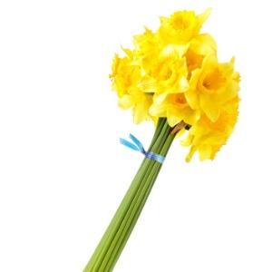 Fotos Conheça Variedade De Flores Amarelas Para Montar O Buquê 09