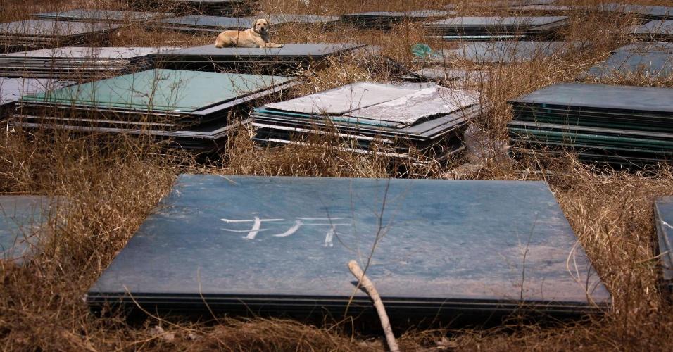 Placas de vidro ficam abandonadas nas imediações do estádio de beisebol erguido para os Jogos de Pequim