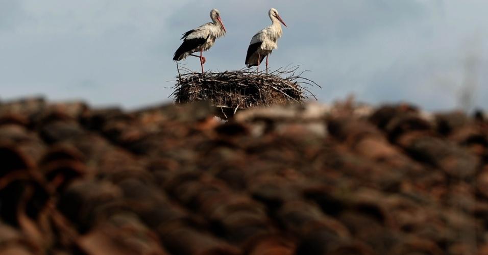 Cegonhas no ninho em um poste de energia elétrica em Orestiada
