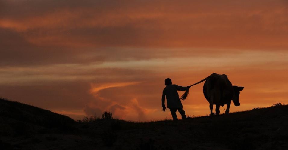 Menino caminha com a sua vaca ao pôr do sol em Mazar-i Sharif, capital da província de Balkh