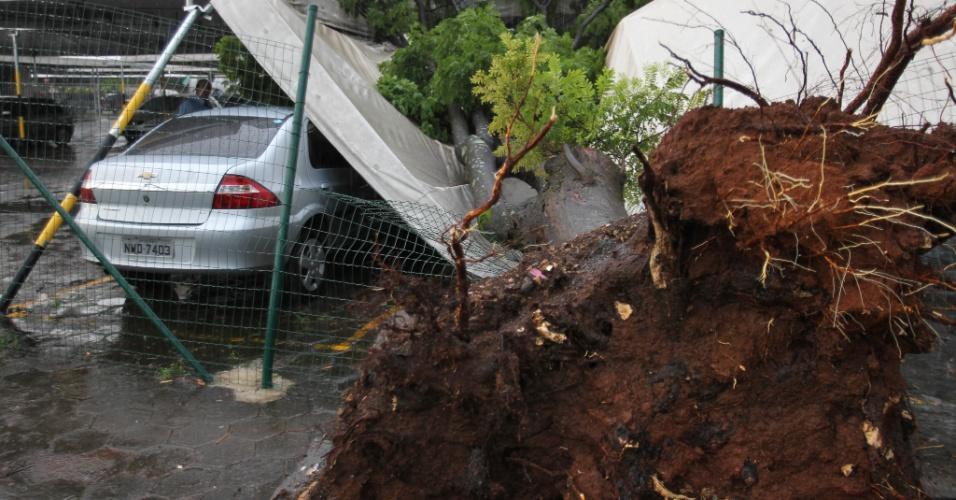 Queda de árvore atinge veículos na  avenida Perimetral,  em Goiânia (GO), após forte chuva que atingiu toda a cidade