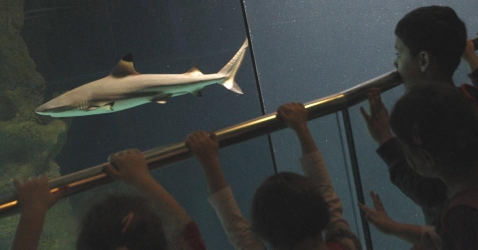 Crianças observam tubarão em aquário de Viena (Áustria)