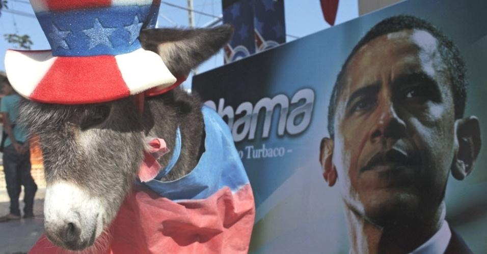 Demo, um filhote de burro, é vestido como mascote do Partido Democrático para comemorar a chegada de Obama ao Estado americano de Cartagena, onde será realizada a 6ª Cúpula das Américas. O nome e o status de mascote são coisa de seu dono, o ex-prefeito de Turbaco Silvio Carrasquilla, que se considera o maior fã de Obama da Colômbia