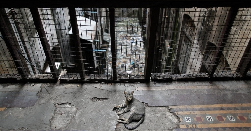 Gato descansa em área de edifício colonial deteriorado de Yangon (Mianmar)