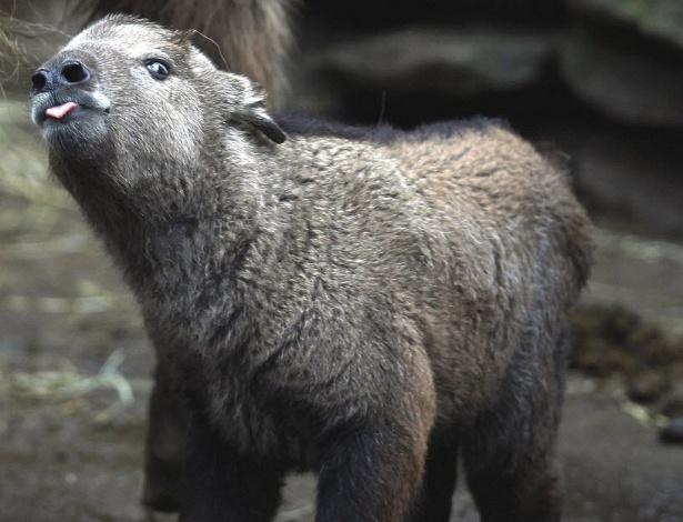 Filhote de gnu de um dia de vida é visto em zoo da República Tcheca