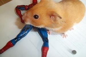Smurf engoliu um ímã que caiu de um boneco do Homem-Aranha
