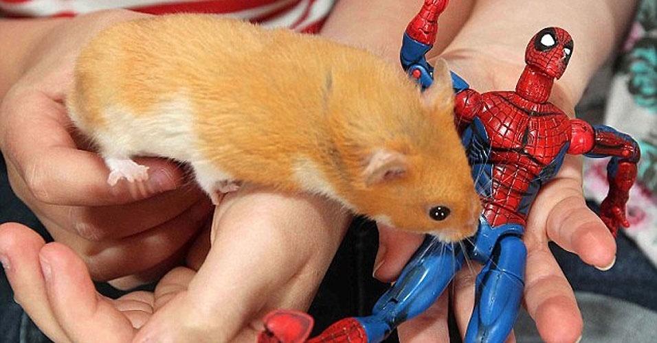 """Um hamster acabou """"grudado"""" nas grades de sua gaiola de metal, depois de engolir um ímã que caiu de um brinquedo, em Northamptonshire, no Reino Unido"""