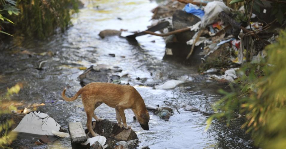 Cachorro é visto perto de riacho tomado por lixo no bairro Bom Jesus, em Porto Alegre (RS)