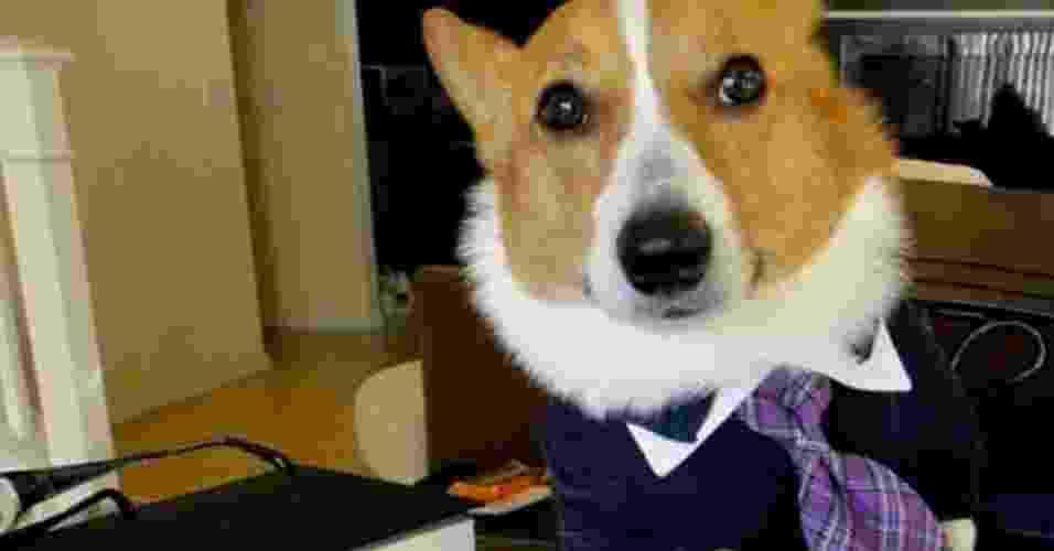 Cão 'advogado' - frases - Reprodução