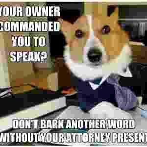 Cão 'advogado'  - Reprodução