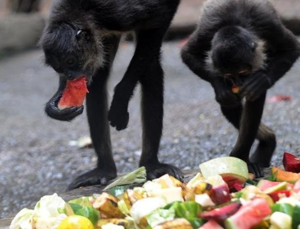 Macacos se alimentam em zoológico de Tegucigalpa, em Honduras