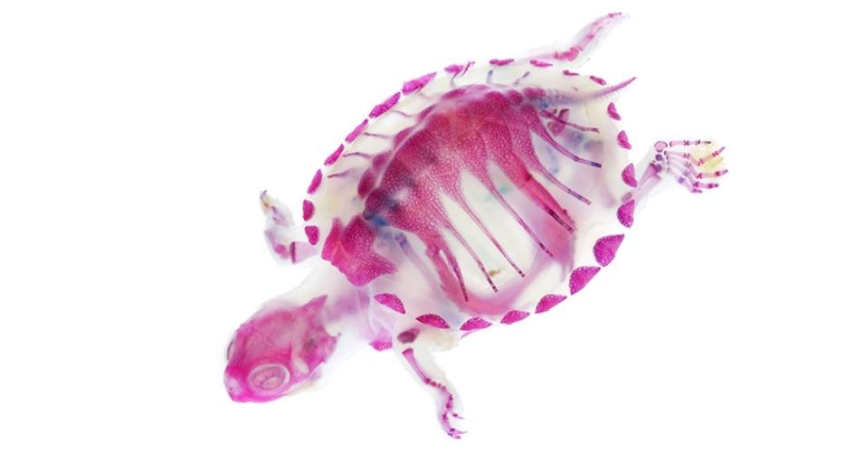 O artista japonês Iori Tomita utiliza um método científico para transformar animais conservados em laboratório em objetos de arte