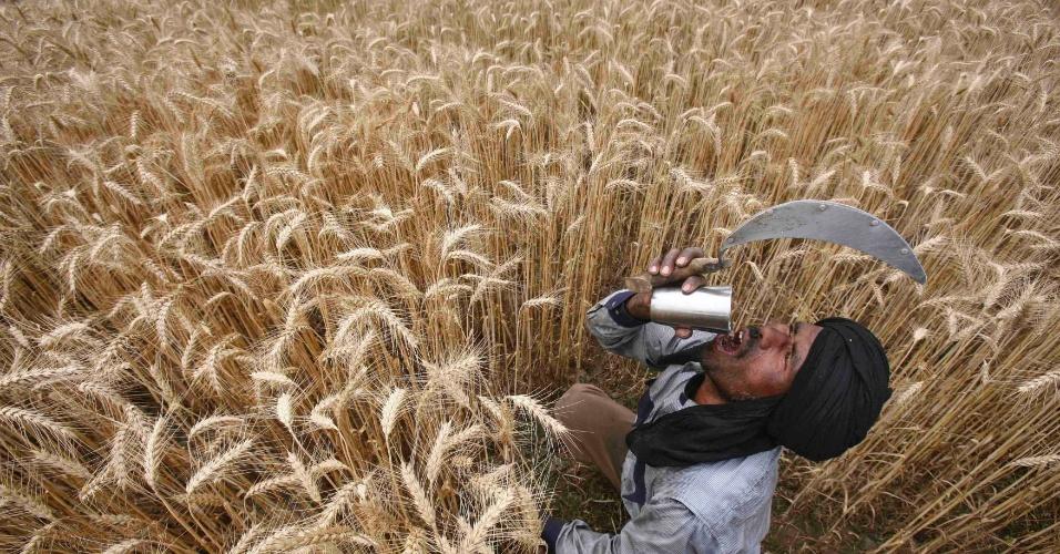 Trabalhador bebe água, durante colheita da safra de trigo em um campo na aldeia Jhanpur, em Punjab