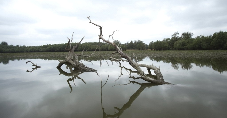 Árvores parcialmente submeresas em hidrovia do parque natural Kopacki Rit, na Croácia. Segundo ambientalistas, um projeto para regulamentar hidrovias no rio Danúbio pode ameaçar a vida no parque