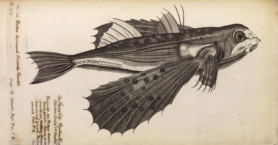 Biblioteca online exibe peixe que quase fez teoria de Newton naufragar