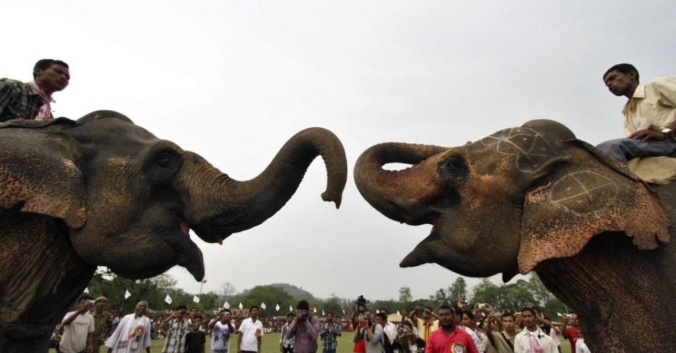 Dois elefantes participam de jogos tradicionais em festival de Bokowo, no Estado de Assam, na Índia