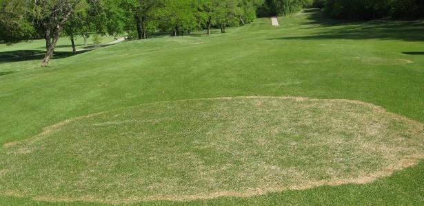 Manchas provocadas pela rizoctonia. Doença sem controle pode progredir para a destruição do gramado - Divulgação K-State Turf