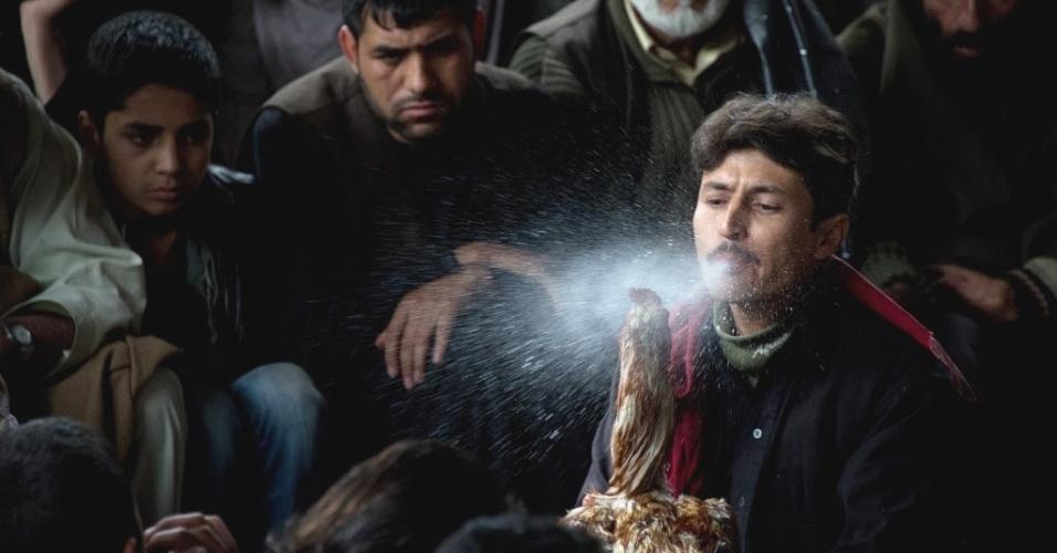 Afegão espirra água em seu galo durante rinha dos animais na capital do país, Cabul