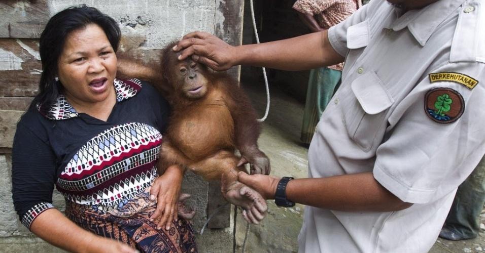 Funcionário do Programa de Conservação dos Orangotangos de Sumatra, na Indonésia, confisca espécime de dois anos, Rahul, na província de Aceh, atingida por um terremoto na semana passada