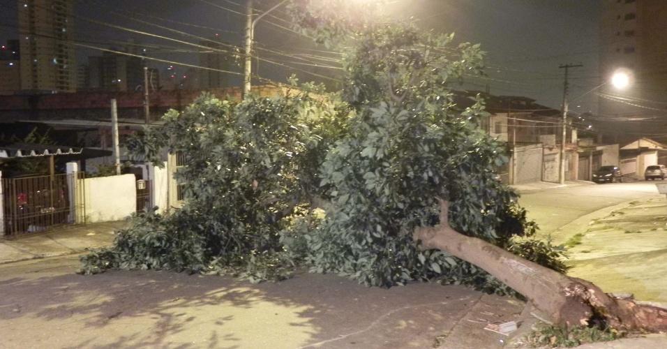 Queda de árvore na noite de quinta-feira (19) interditou rua no bairro do Jabaquara, zona sul da capital paulista