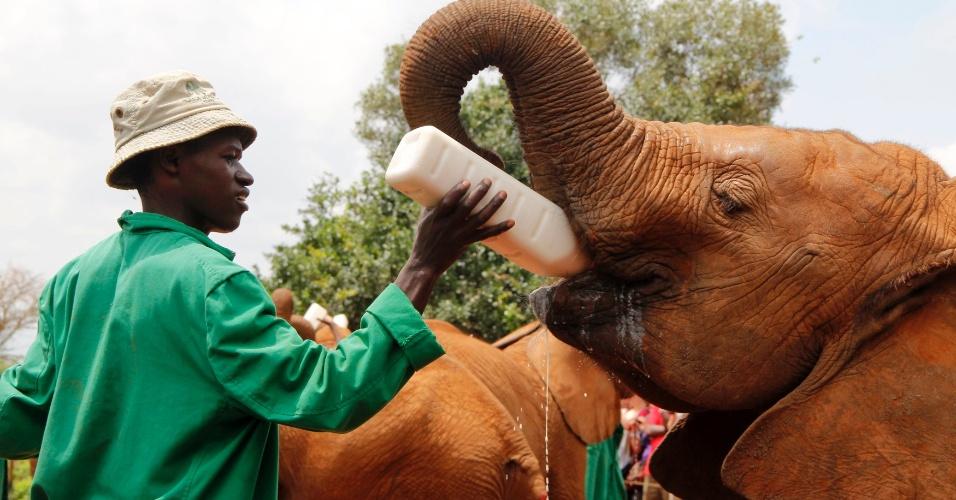 Orfanato de animais cuida de filhotes de elefantes no Quênia