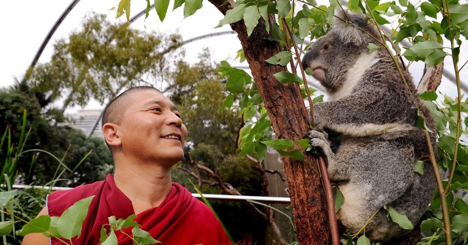 Monge tibetano observa coala em visita a parque de vida selvagem em Sydney, na Austrália, para abençoar os animais do país