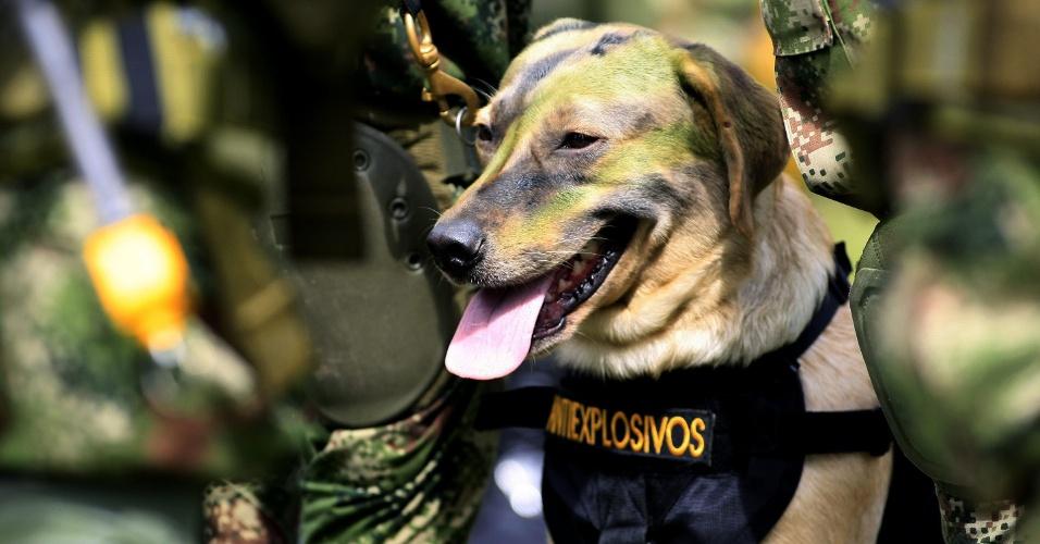 Cão membro do Exército da Colômbia, em uma demonstração durante visita do secretário de defesa dos EUA, Leon Panetta, em Tolemaida