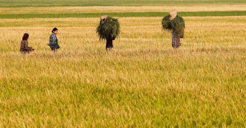 Mulheres caminham nesta terça-feira (24) em um arrozal em Naypyitaw, em Mianmar