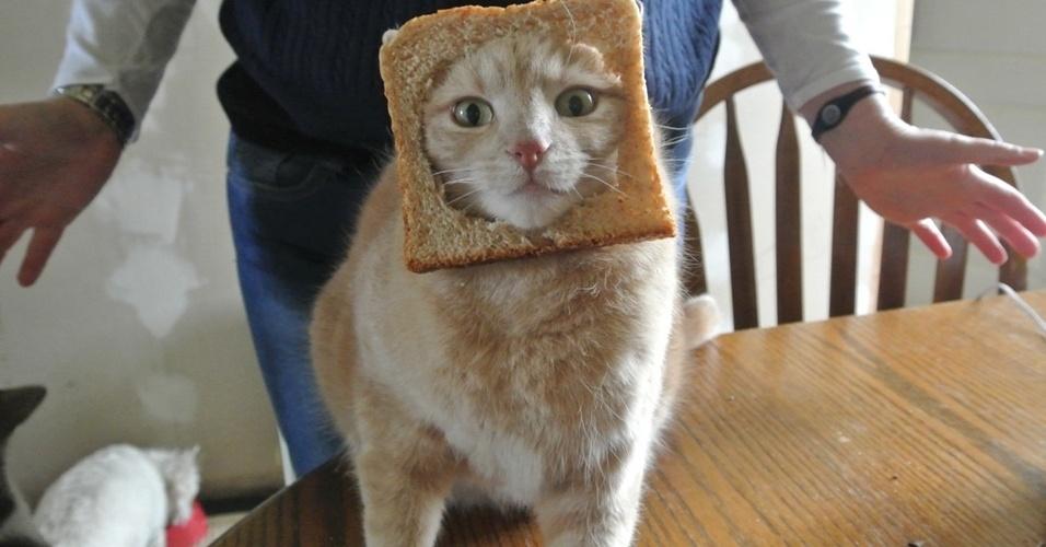 album tumblr gato pão de forma