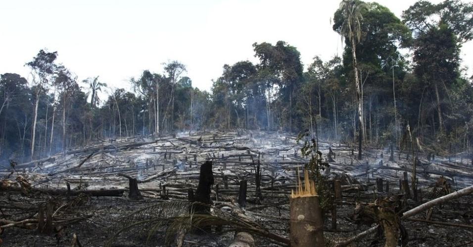 Durante o dia, o desmatamento prossegue na região. Calcula-se que quase um terço das terras Awá foi tomado em operações ilegais