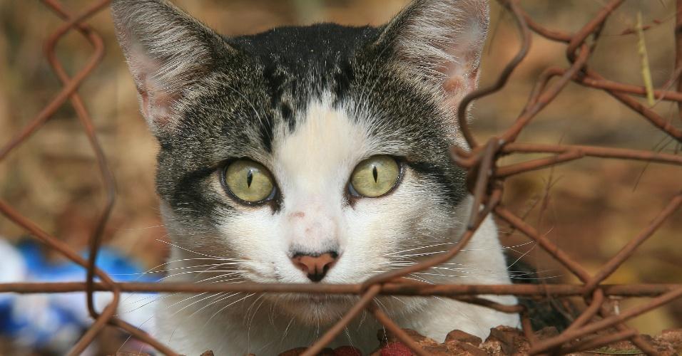 Cuidadores amadores alimentam gatos e montam abrigos improvisados para os animais no morro São Bento, em Ribeirão Preto (SP)