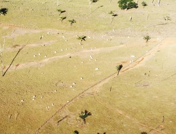 27.abr.2012 - A criação de gado é uma das atividades de fazendas que ocupam grandes áreas nas proximidades da região onde será construída a usina hidrelétrica de Belo Monte, no rio Xingu, no Pará, segundo a Norte Energia, empreendedor responsável pela construção e operação da usina